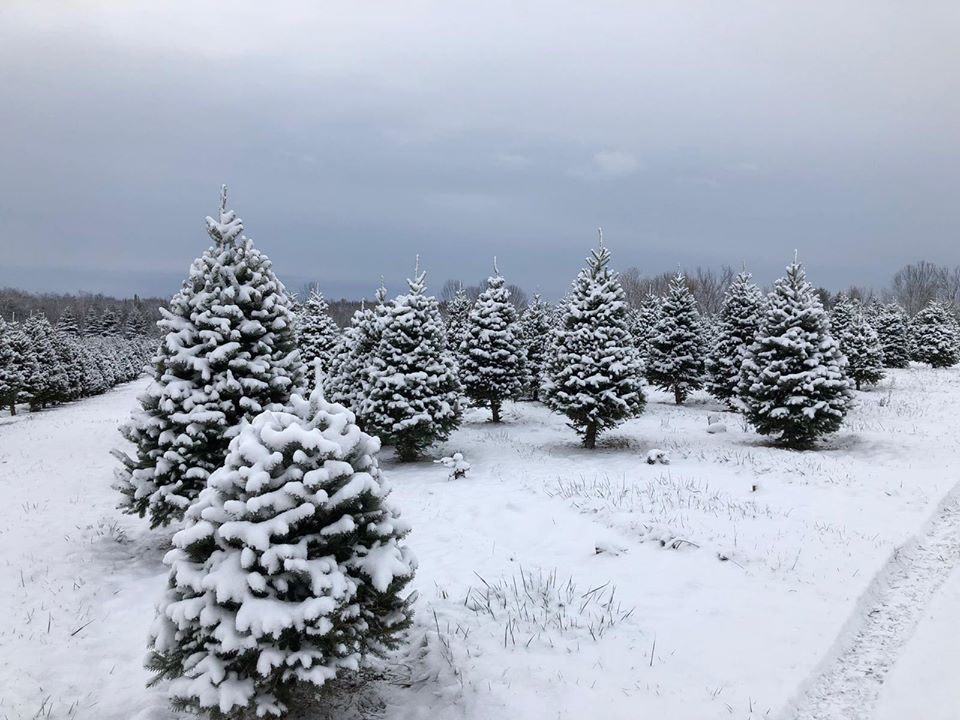 Wintersinger's Tree Farm image 1